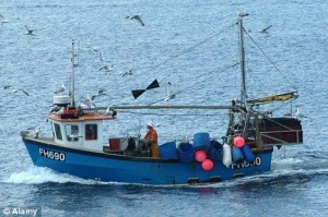 Cruel practice: The animals are being hauled aboard trawlers operating off the Cornish coast