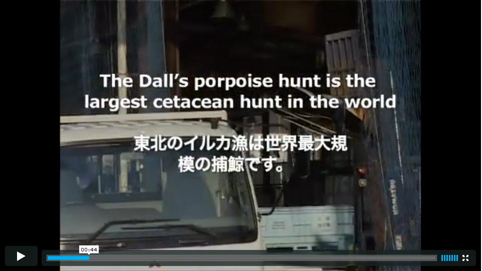 イルカ漁は捕鯨……?