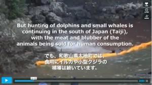 東北のイルカ漁とは無関係な太地のイルカ追い込み漁